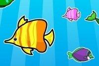 Match poissons