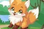 Prendre soin du renard