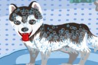 Laver l'Adorable Husky